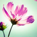 乳癌全摘手術後の傷のケア
